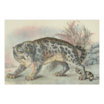 Ounce (Snow Leopard) Poster