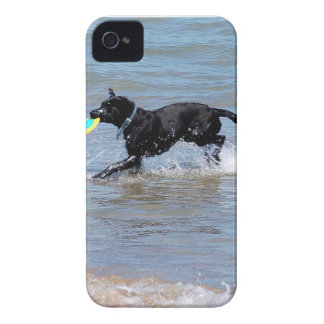 Our Black Labrador Retrieving Frisbee from Lake iPhone 4 Case-Mate Cases