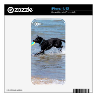 Our Black Labrador Retrieving Frisbee from Lake iPhone 4S Decal
