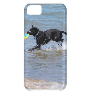 Our Black Labrador Retrieving Frisbee from Lake iPhone 5C Cover