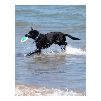 Our Black Labrador Retrieving Frisbee from Lake Letterhead