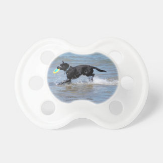Our Black Labrador Retrieving Frisbee from Lake Pacifier