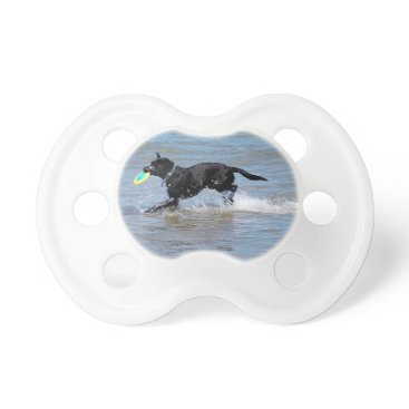 Beach Themed Our Black Labrador Retrieving Frisbee from Lake Pacifier