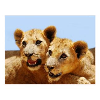 Our cute lion faces postcards
