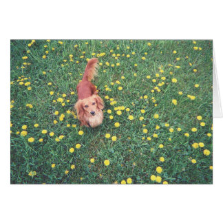 """OUR DACHSHUND-DUBLIN-THE GRASS """"IS"""" GREENER ON THE CARDS"""