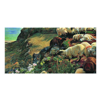 Our English Coast (Stray Sheep) By Hunt William Photo Cards