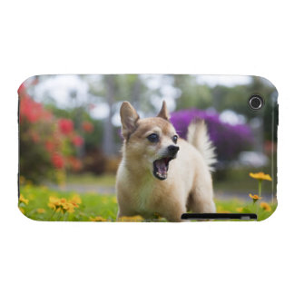 Our pet dog kekai. He's half pomeranian and half iPhone 3 Cover