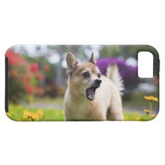 Our pet dog kekai. He's half pomeranian and half iPhone SE/5/5s Case