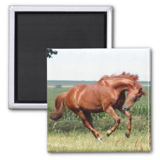 Our thoroughbred horse having fun! 2 inch square magnet