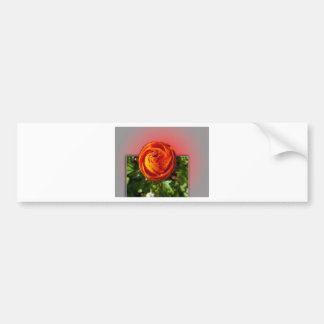 Out of Bounds Red Flower with red background. Bumper Sticker