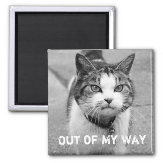 """Out of My Way"" Crabby Cat Magnet"