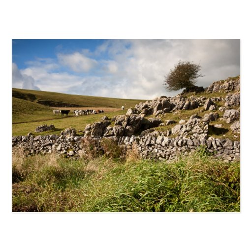 Out on the Dales Postcard