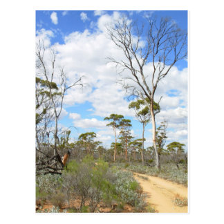 Outback Australiens Postcard