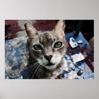 Outdoor Cat Poster
