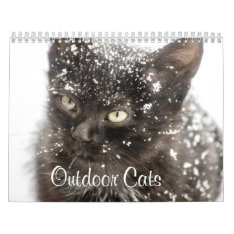 Outdoor Cats In Nature Calendar at Zazzle