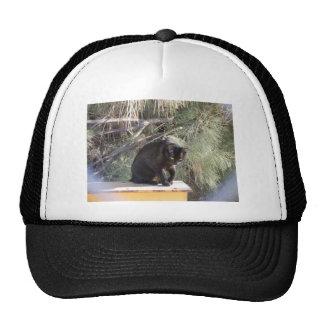 Outdoor Joy Trucker Hat