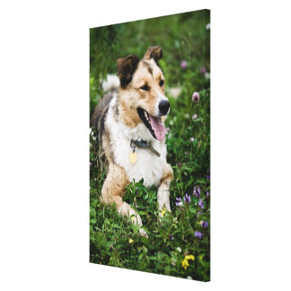 Outdoor portrait of dog lying down in meadow canvas print