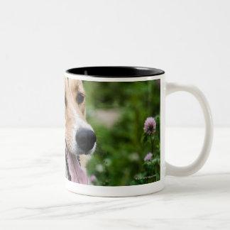 Outdoor portrait of dog lying down in meadow coffee mugs