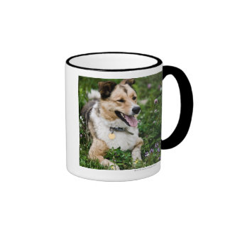 Outdoor portrait of dog lying down in meadow coffee mug