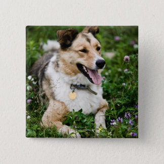 Outdoor portrait of dog lying down in meadow pinback button
