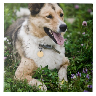 Outdoor portrait of dog lying down in meadow large square tile