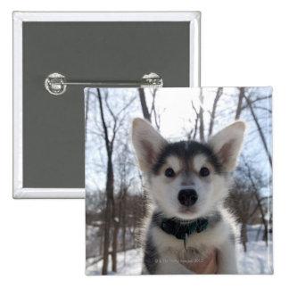 Outdoor portrait of husky dog puppy button