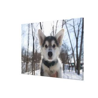 Outdoor portrait of husky dog puppy canvas print