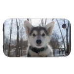 Outdoor portrait of husky dog puppy iPhone 3 tough cases