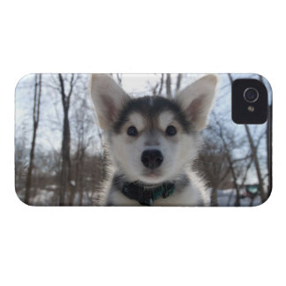 Outdoor portrait of husky dog puppy iPhone 4 Case-Mate case