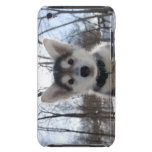 Outdoor portrait of husky dog puppy iPod touch covers