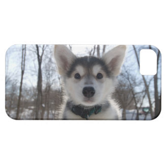 Outdoor portrait of husky dog puppy iPhone SE/5/5s case