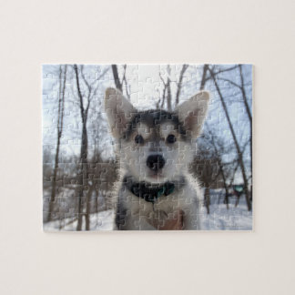 Outdoor portrait of husky dog puppy jigsaw puzzle