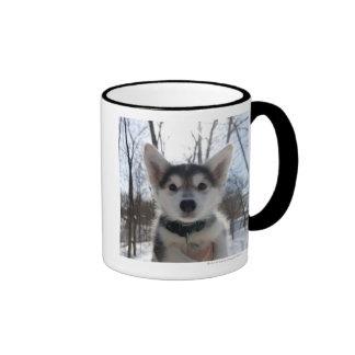 Outdoor portrait of husky dog puppy ringer coffee mug