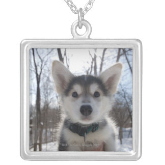 Outdoor portrait of husky dog puppy silver plated necklace