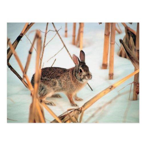 Outdoor Rabbit Postcard
