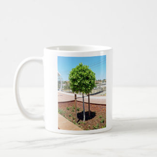 Outdoor topiary in brick planter mugs