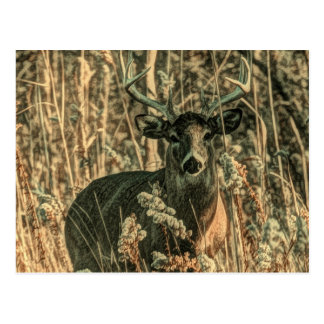 outdoorsman wilderness Camouflage whitetail deer Postcard