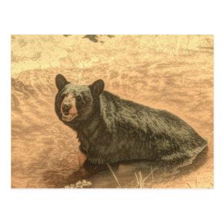 outdoorsman wilderness river wildlife black bear postcard