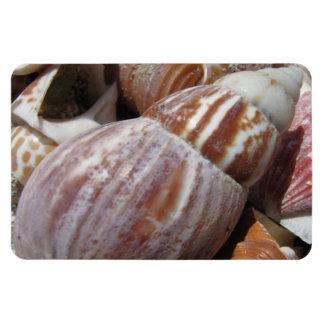Outer Banks Seashells, North Carolina Magnet