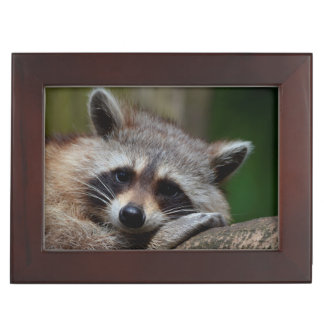 Outrageously Cute Baby Raccoon Memory Boxes