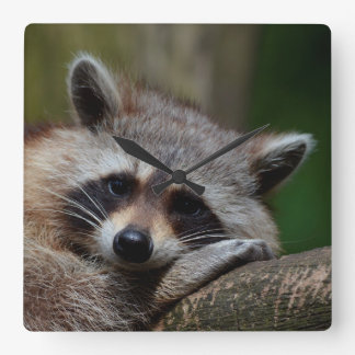 Outrageously Cute Baby Raccoon Square Wall Clock