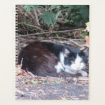"Outside farmyard cat. planner<br><div class=""desc"">Taken at a local dairy farm, of a feral cat.</div>"