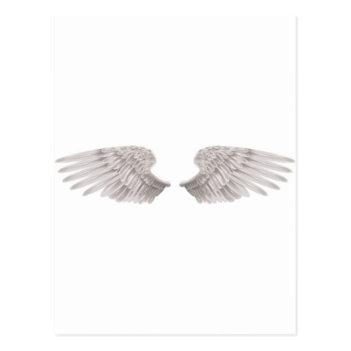 outstretched beautiful white wings postcard