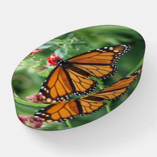 Oval Glass Paperweight of Monarch Butterfly