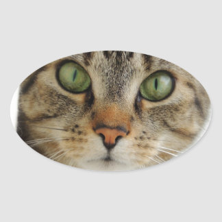 Oval stickers cat