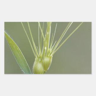 Ovate goatgrass (Aegilops geniculata) Rectangular Sticker