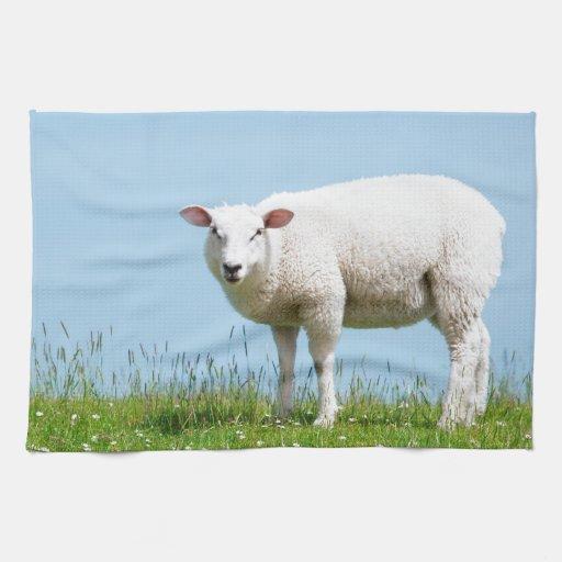 oveja blanca en un prado toallas de cocina