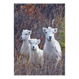 Oveja de las ovejas de Dall con la tarjeta de guía Tarjetas De Visita Grandes