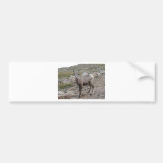 Oveja de las ovejas del Big Horn de la montaña Pegatina Para Auto