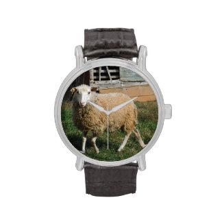 Ovejas blancas jovenes en la foto de la granja de  relojes